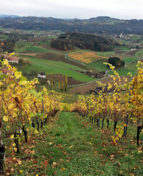 styria vineyards