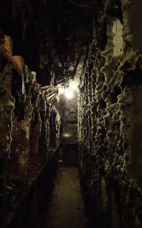 cellar mould