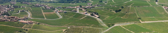 Pouilly Vineyards