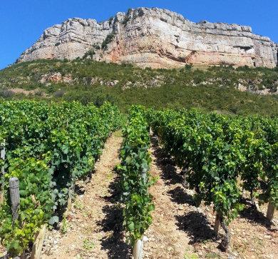 solutre vineyards