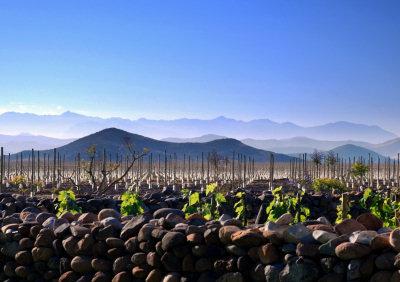 tabali-vineyard