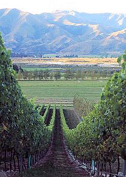 waitaki vineyard
