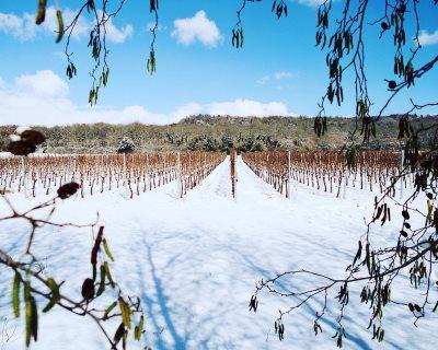 Westwell Wines