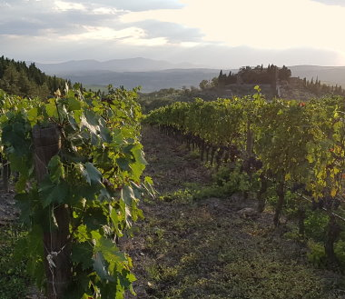Luce vineyard