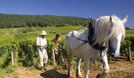 Mischief & Mayhem in Burgundy | wine-pages
